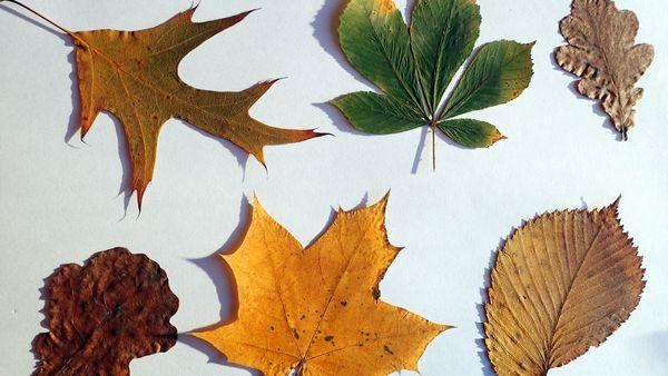 leaves-games-head